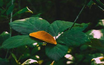 Cannabis vs. Hemp: Understanding the Key Difference